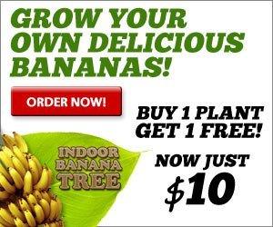 indoor banana tree
