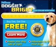 doggie bright collar
